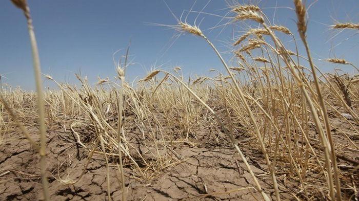 Засуха Украине не грозит - Гидрометцентр