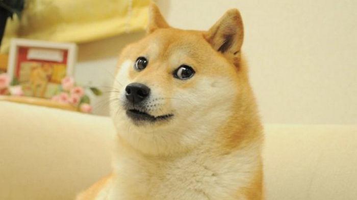 Мем Doge был продан на NFT-аукционе за $4 млн