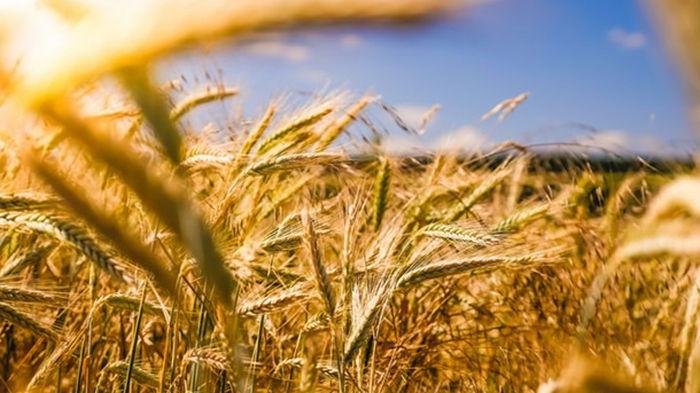 На Кировоградщине собрали первый миллион тонн зерновых