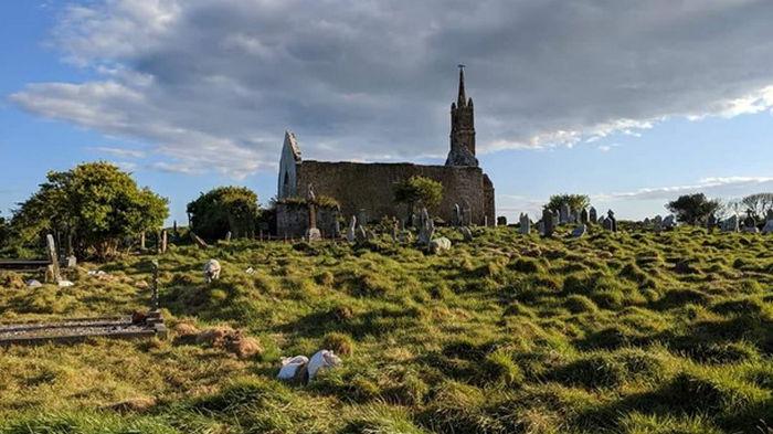В Ирландии историки наняли на работу стадо овец (видео)