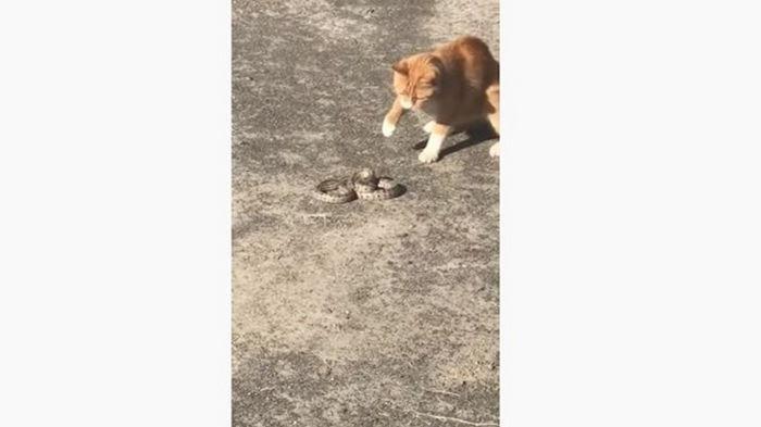 В Херсоне кот убил змею (видео)