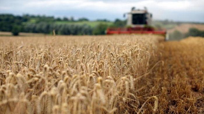 Украина нарастила экспорт агропродукции в ЕС