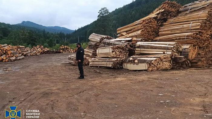 Из заповедной зоны на Буковине продавали лес на миллионы гривен
