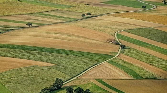 В Минагрополитики назвали количество земельных сделок за два месяца
