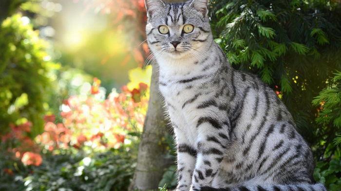 Ученые узнали, почему некоторые кошки становятся полосатыми