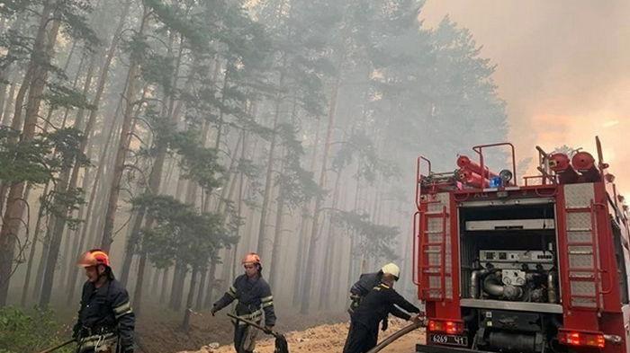 В Украине за год на 20% сократилось число лесных пожаров