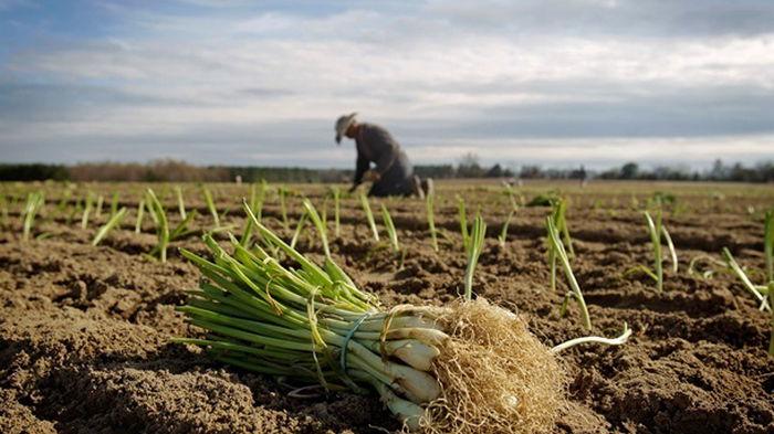 Рада утвердила денежную помощь для молодых фермеров
