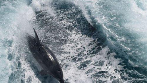 На берег Азовского моря выбросило мертвых дельфинов (фото)