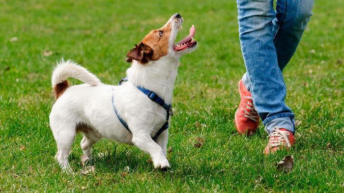 Гиперактивная собака: 6 советов, как успокоить питомца