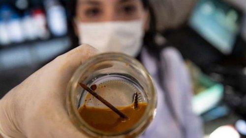 Ученые обнаружили бактерии, съедающие гвоздь за три дня